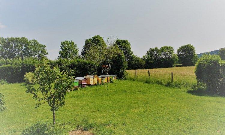 Les ruches de Frédéric à la fontaine aux oiseaux chambre d'hôtes à côté de Besançon